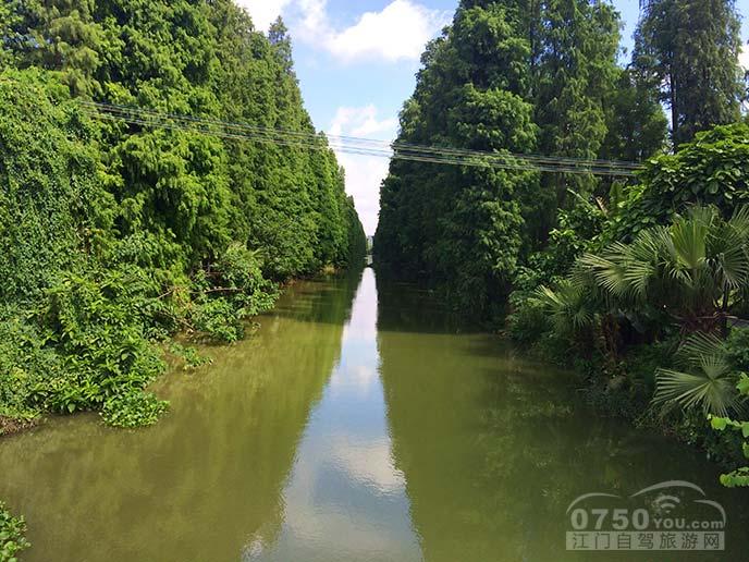 礼睦路边的小河很美,两边的水杉树很高很密.