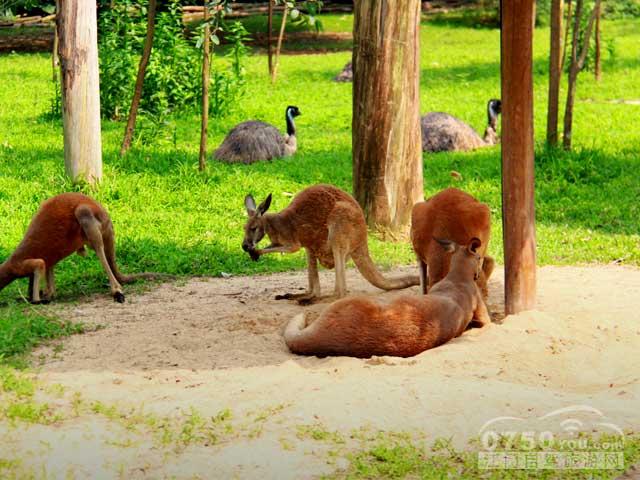 广州番禺长隆野生动物世界是广东最大的野生动物园区